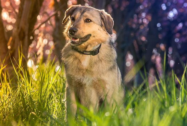 Vortrag Hundesprache in der Hundeschule Brass in Essen