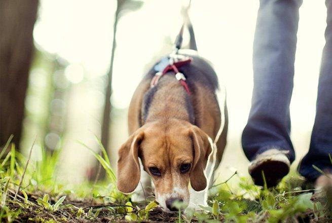 Mantrailing in Essen für Hundenasen