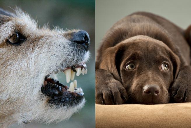 Einzeltraining Problemhunde in der Hundeschule Brass in Essen