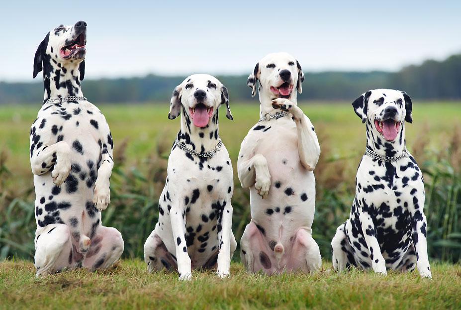 Trickdogging Essen für schlaue Hunde