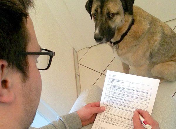 Sachkundenachweis für Hundebesitzer in Essen