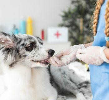 Hunde Krankenversicherung erspart hohe Tierarztkosten