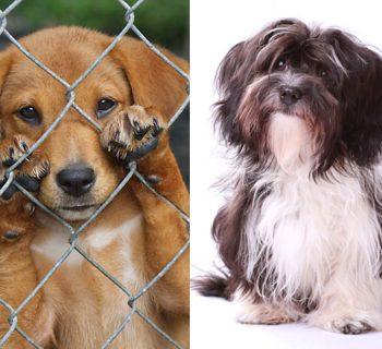 Ein Tierschutz Hund oder ein Hund vom Züchter