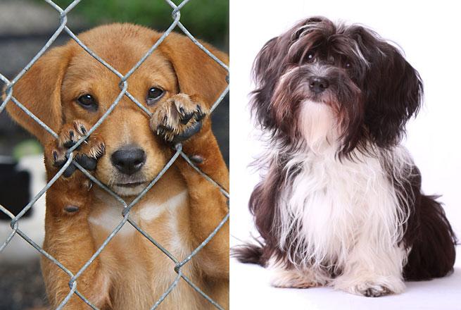 fc19625da0ff93 Ein Tierschutz Hund oder ein Hund vom Züchter   Hundeschule Brass GbR