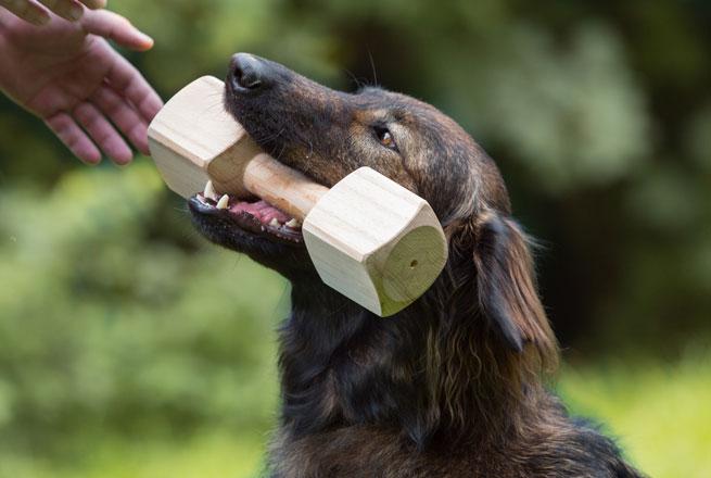 Apportierkurs in Essen für bringfreudige Hunde